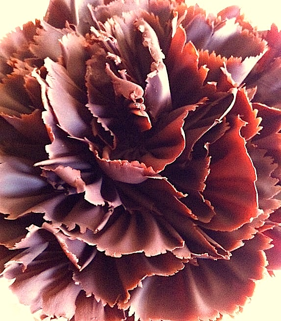 Chocolate ruffle by Alice Medrich, so pretty!